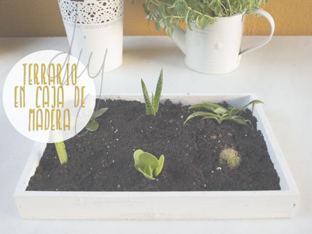 Diy Terrario En Una Caja De Madera Mlc Estudio Inspiración Y Diseño Para Tu Día A Día